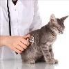 Ветеринарные клиники в Косино